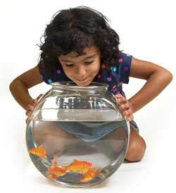 Kids Starter Pet, Goldfish